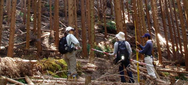 びわ湖の森CO2吸収認証制度